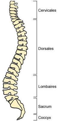 Les os de vos colonne