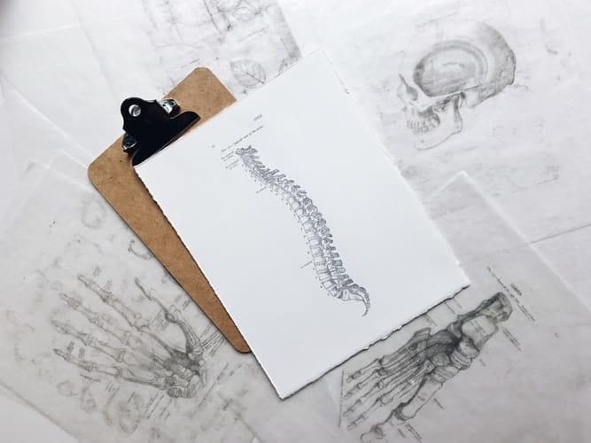 Les secrets d'une colonne vertébrale en bonne santé…